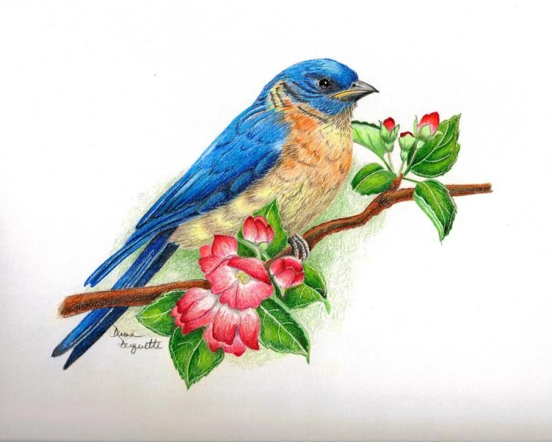 Color Pencil Sketches Of Birds Google Search With Images