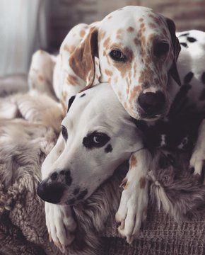 Khaleesi And Django Cute Puppies Dogs Puppies
