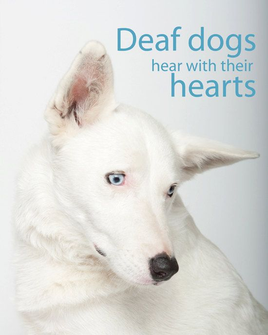 Deaf Dogs Hear With Their Hearts 19 00 Dogs Dogs