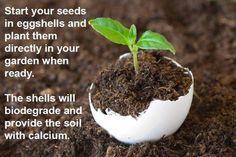 #gardensthatwin #seeding #startgarden #grow #gren #gardening #howtogarden #gardens #garden #ilovegardening #gardener