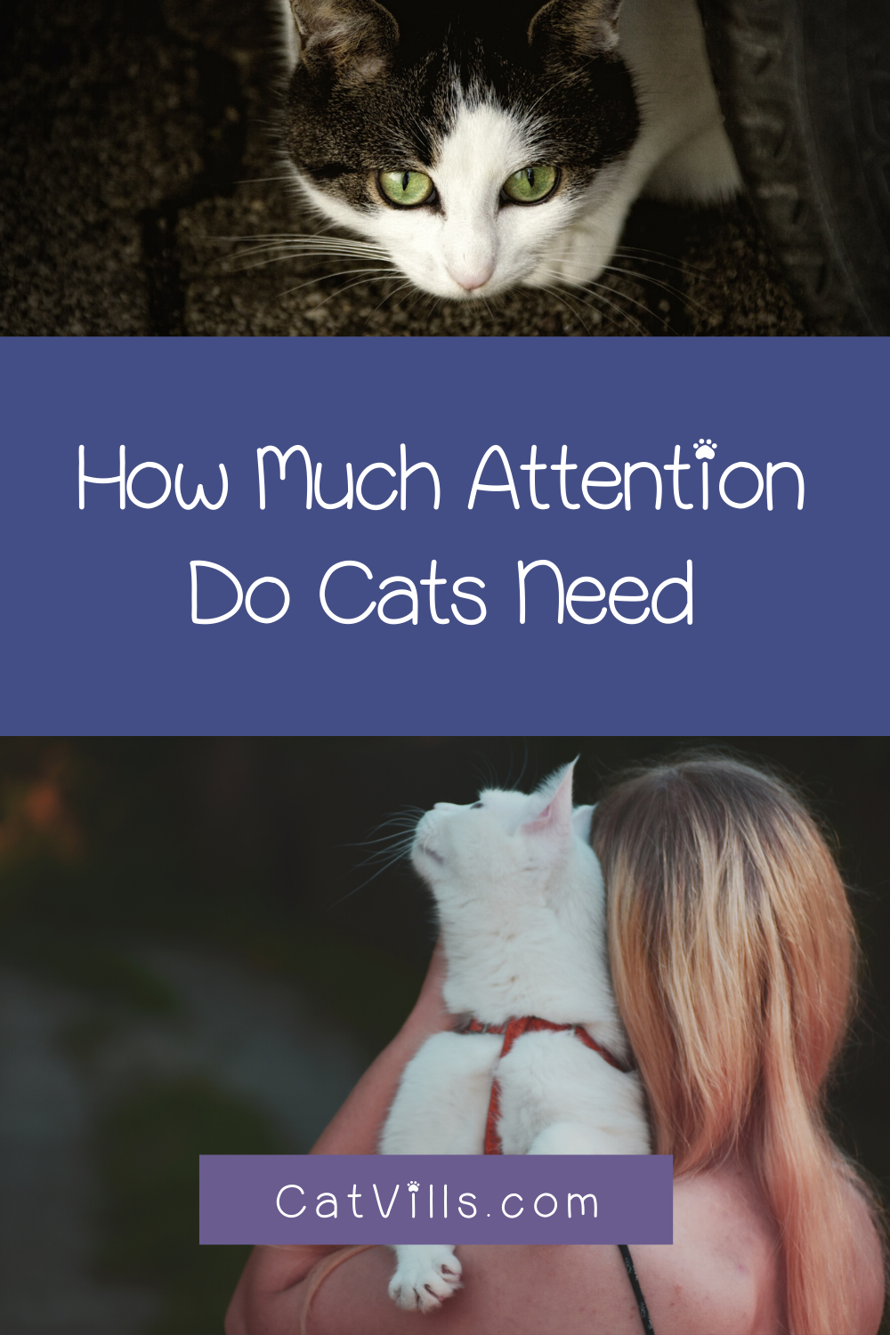 5 Signs Your Cat Needs More Attention Cats Cat Behavior Indoor Pets