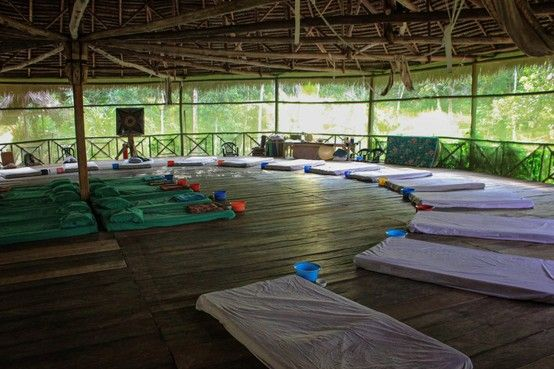 Ayahuasca The Ultimate Beginners Guide to Understanding Ayahuasca and What You Need to Know