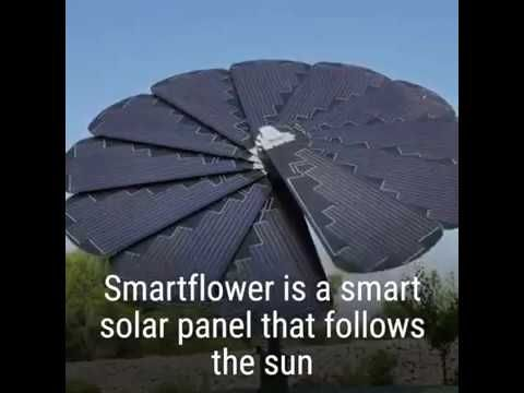 This Blooming Sunflower Collects Energy From The Sun A Great Example Of How Biomimicry In Our Tech Can Help Us Move Forward Interesting News Youtube Solar
