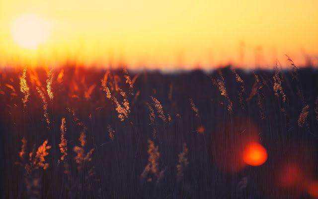 خلفية الاسبوع غروب الشمس في الصيف 85 مداد الجليد Sunset Landscape Field Wallpaper Photography Wallpaper