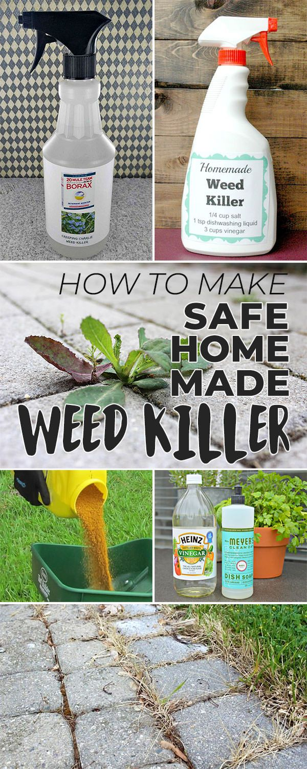7671fb962fcf3cfe08e1c8f5e33bef03 - Natural Weed Killer Better Homes And Gardens