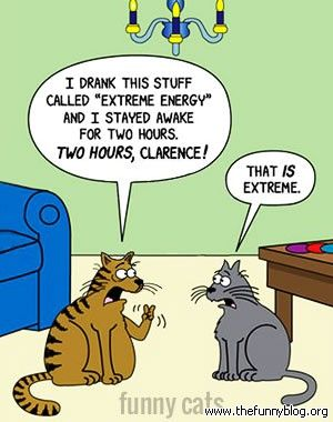 cats problem, funny conversation about sleep funny cats ...