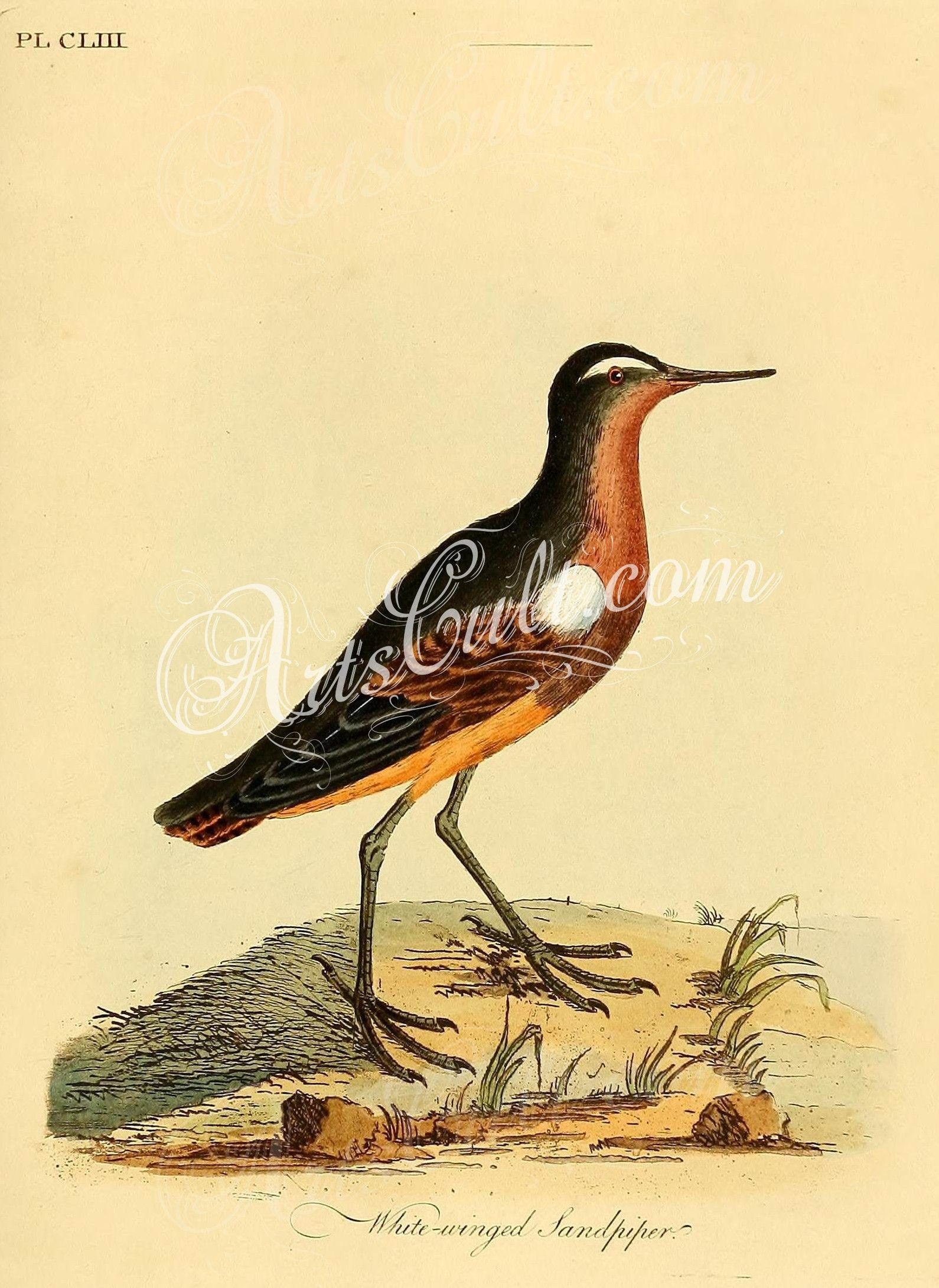 Stunning Sandpiper Birds Wall Decor Pictures Inspiration - The Wall ...
