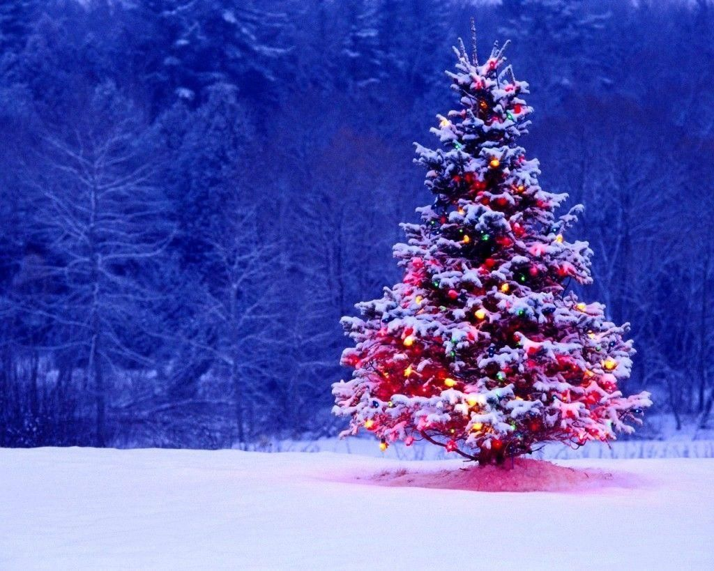 Check The Best Collection Of Christmas Tree Wallpaper Hd Download