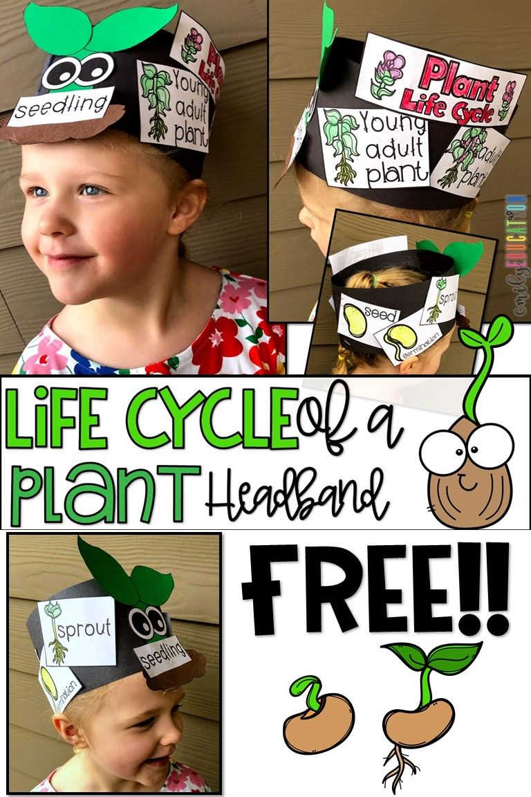 Plant Books And Activities For Kids Emily Education Plants Life Cycle Activities Plant Life Cycle Plant Life Cycles Kindergarten [ 1152 x 768 Pixel ]
