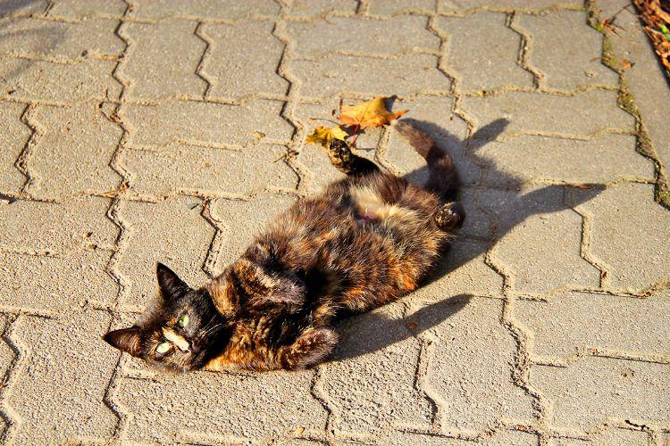 Погладь кошку!
