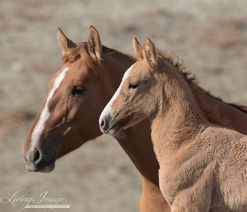 Wild Mother and Foal Fine Art Wild Horse by WildHoofbeats on Etsy, $35.00