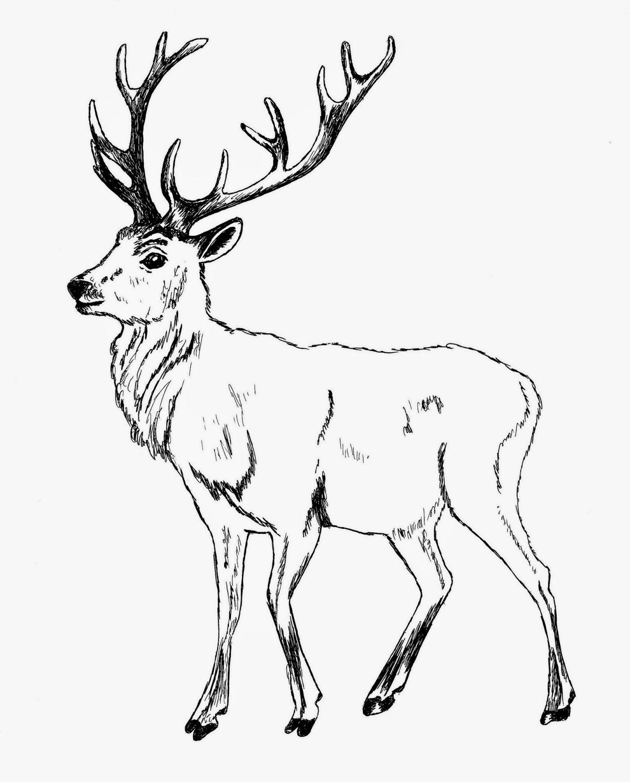 черно белые картинки благородного оленя купила