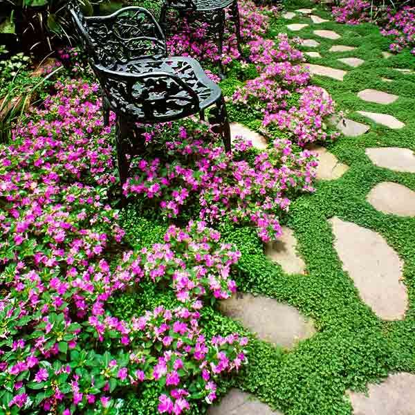 Flagstone Filler Plants : All about groundcover sandy soil flagstone path and plants