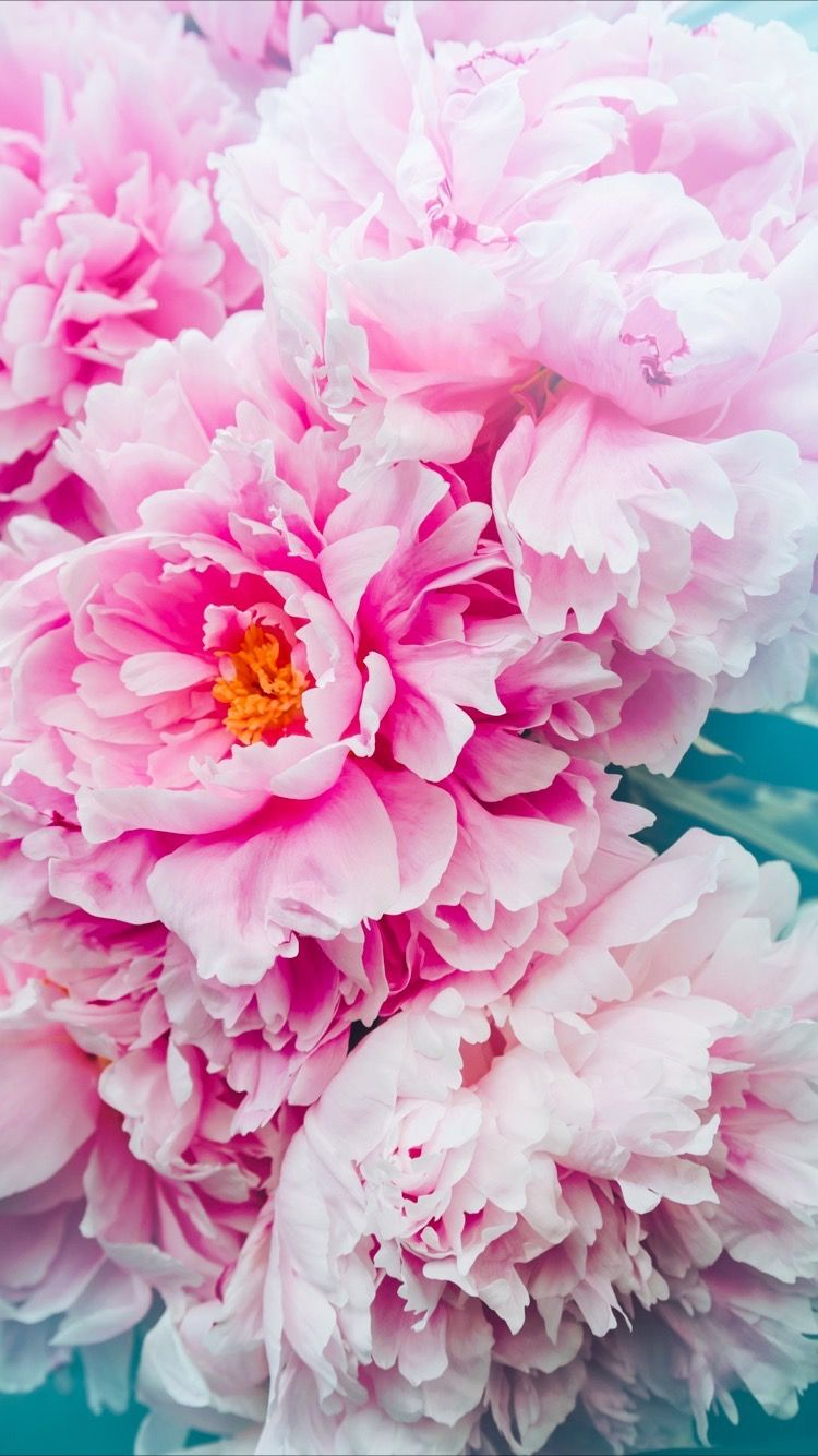 Tap To Get Free App Pink Flower Wallpaper With Peony For Your