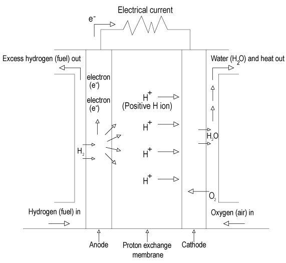 Proton Exchange Membrane Fuel Cell Schematic Ford Pem Fuel Cell Fuel Cell Hydrogen Fuel