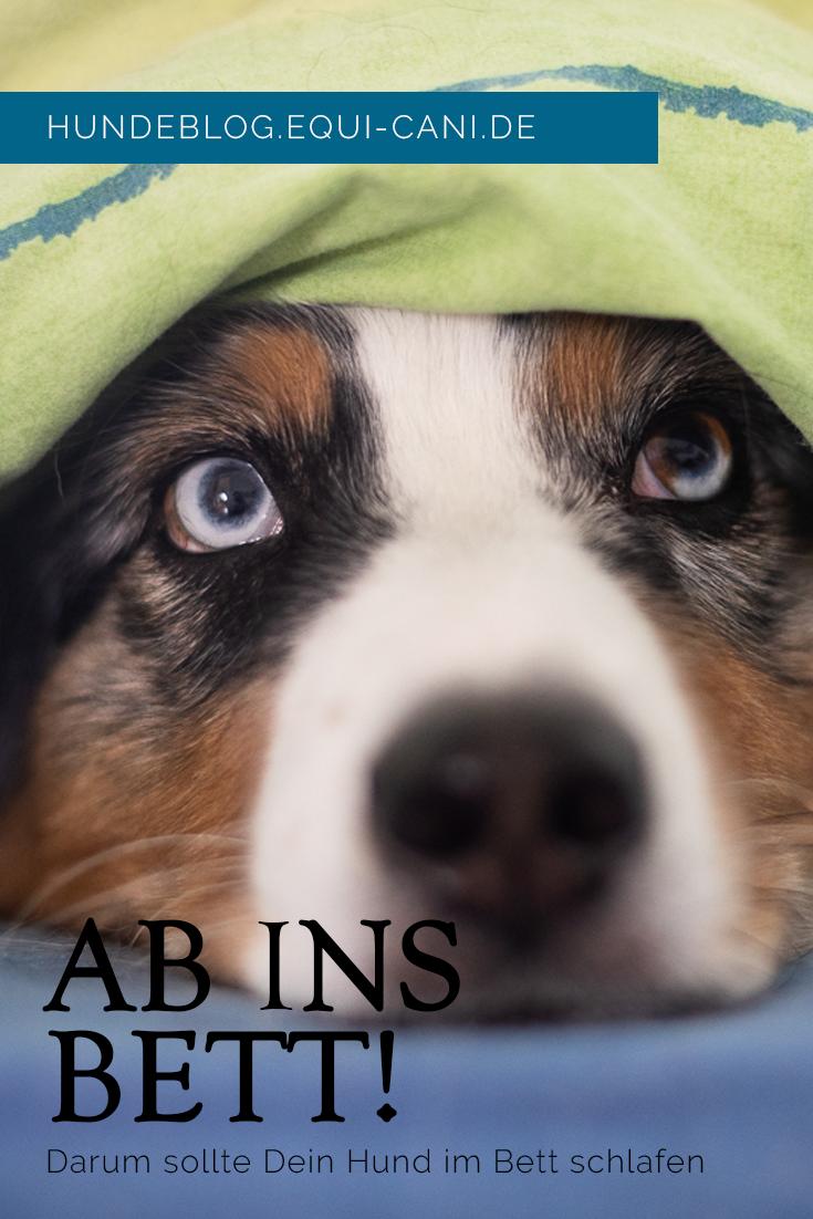 Hund Ja Oder Nein