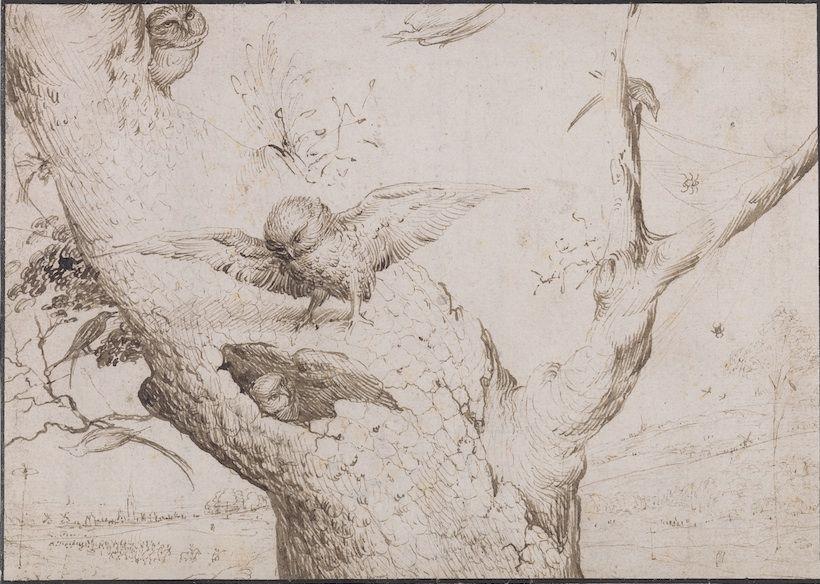 Jérôme Bosch (vers 1450-1516) Le Nid de hiboux, vers 1505, Plume et encre brune - 14,1 x 19,7 cm Rotterdam, Museum Boijmans Van Beuningen