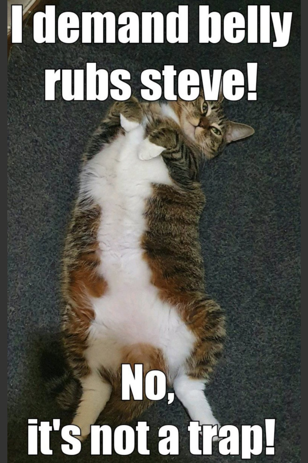 I Want Some Belly Rubs Steve Animal Memes Happy Animals Funny Cats And Dogs