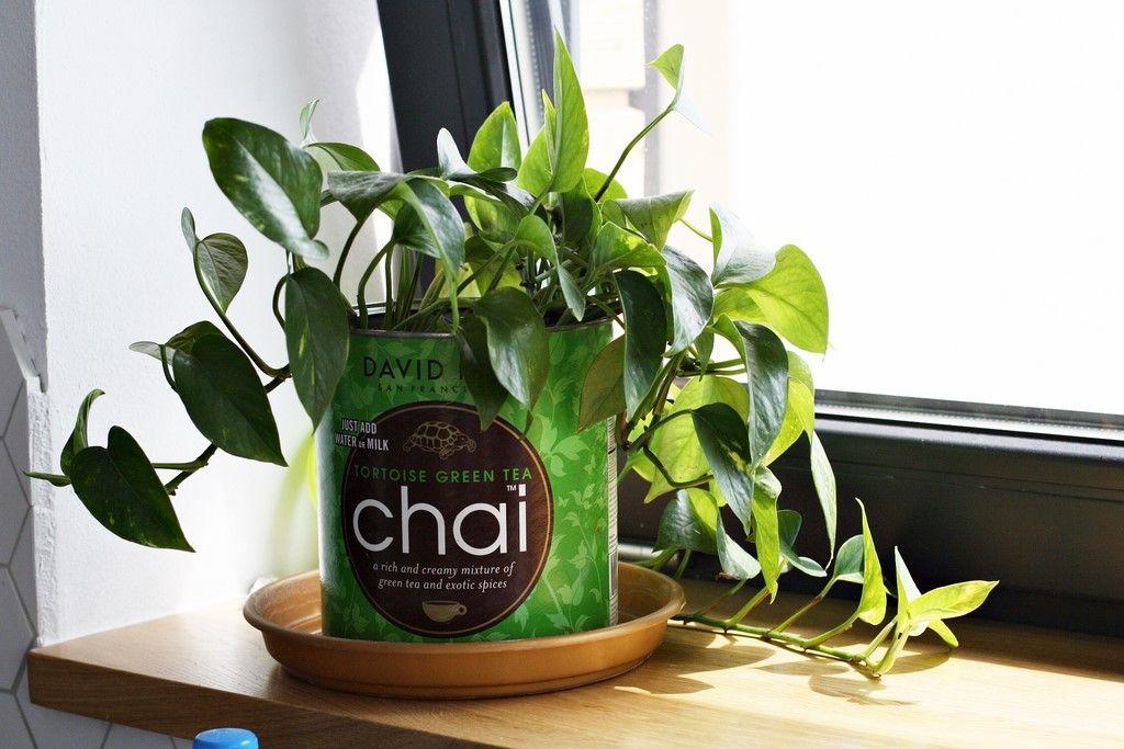 Kwiaty Doniczkowe W Naszym Domu Wybralam Te Naprawde Latwe W Uprawie Basia Szmydt Blog Green Green Tea Green Tee