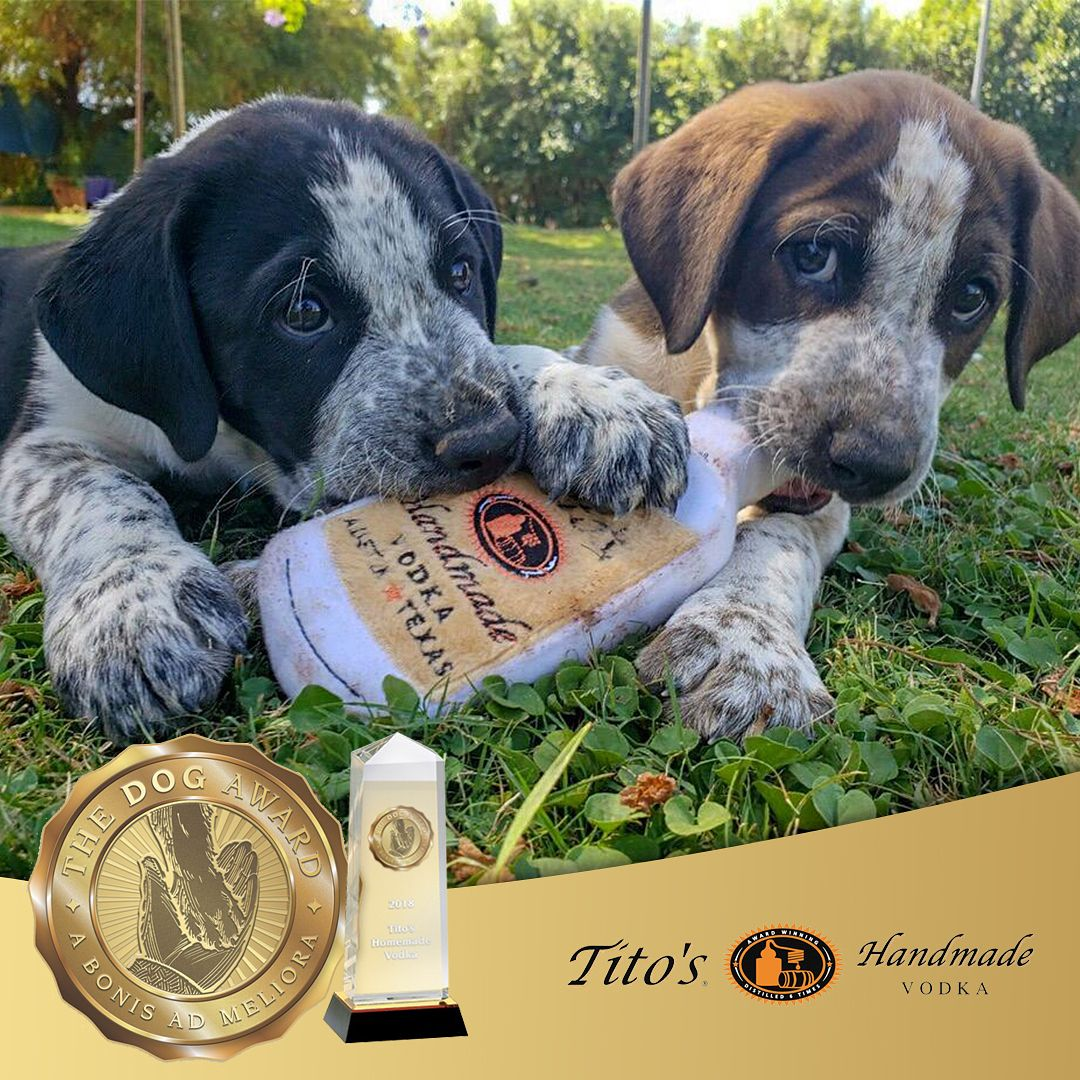 Dogs Work An Advocacy Group That Supports Dogs In The Human Workplace Announce The Ten Winners Of The 2018 Dog Award The Awards Support Dog Dog Friends Dogs