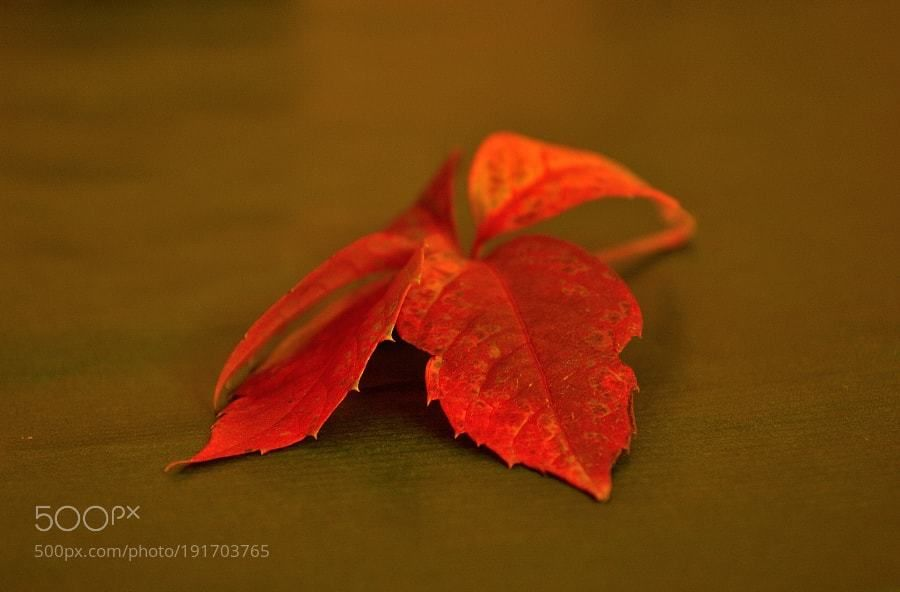 #Popular on #500px leaves by crescenzov2 #Nature #travel #image #Photo #photography https://t.co/q8CehRuNIa #followme #photography