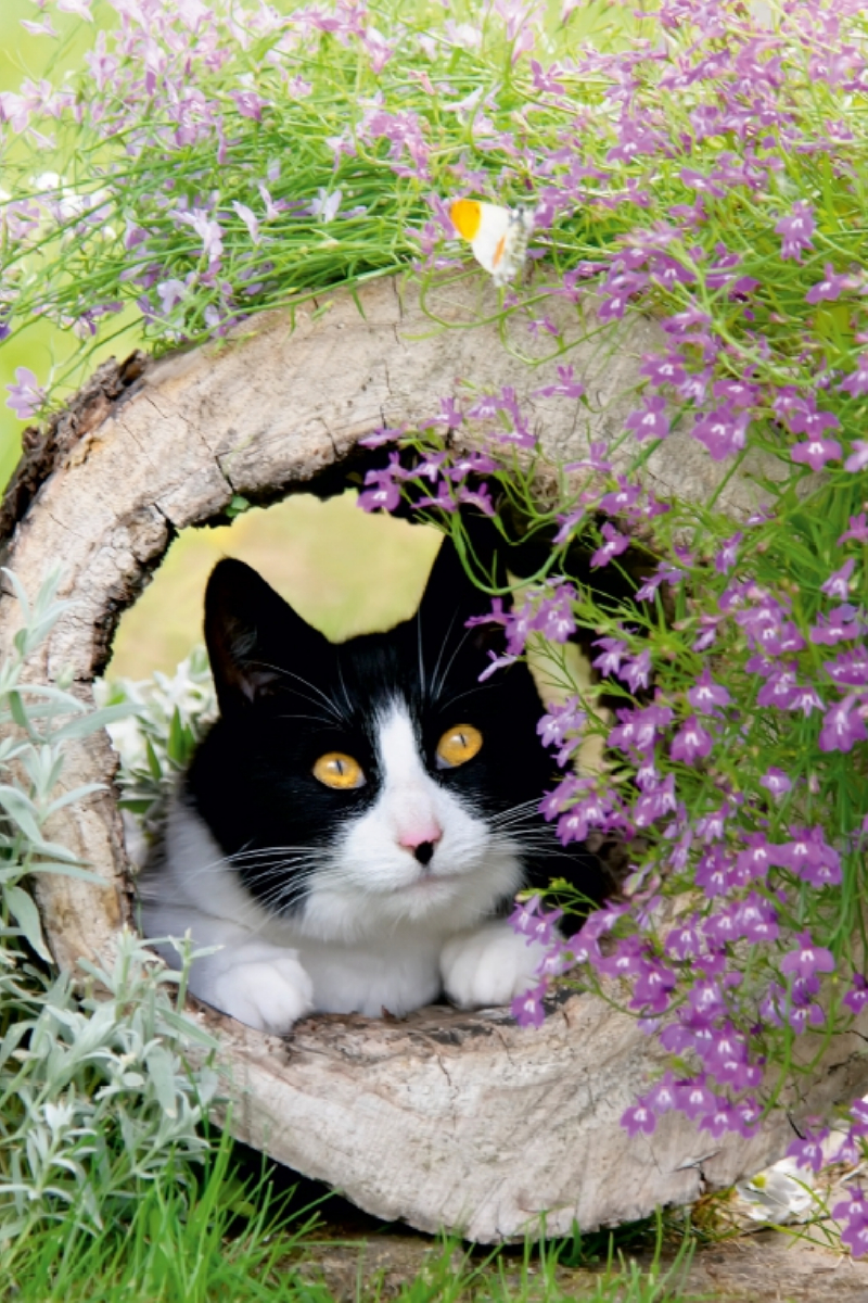 Leinwand: Neugierige Katze beobachtet Schmetterling