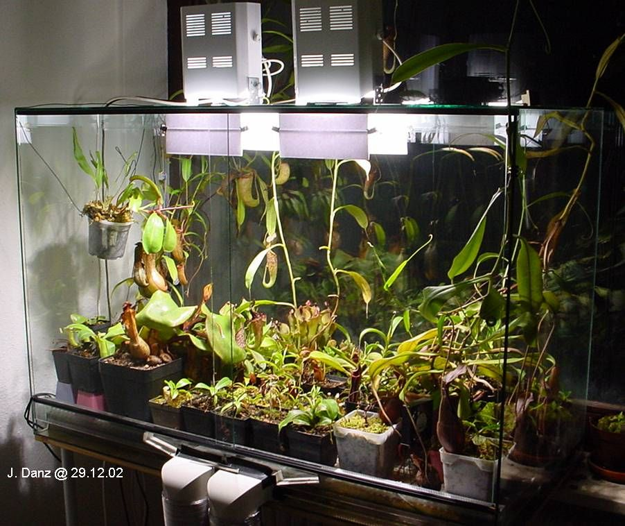 pin by tim gorin on carnivorous plant terrariums plants. Black Bedroom Furniture Sets. Home Design Ideas
