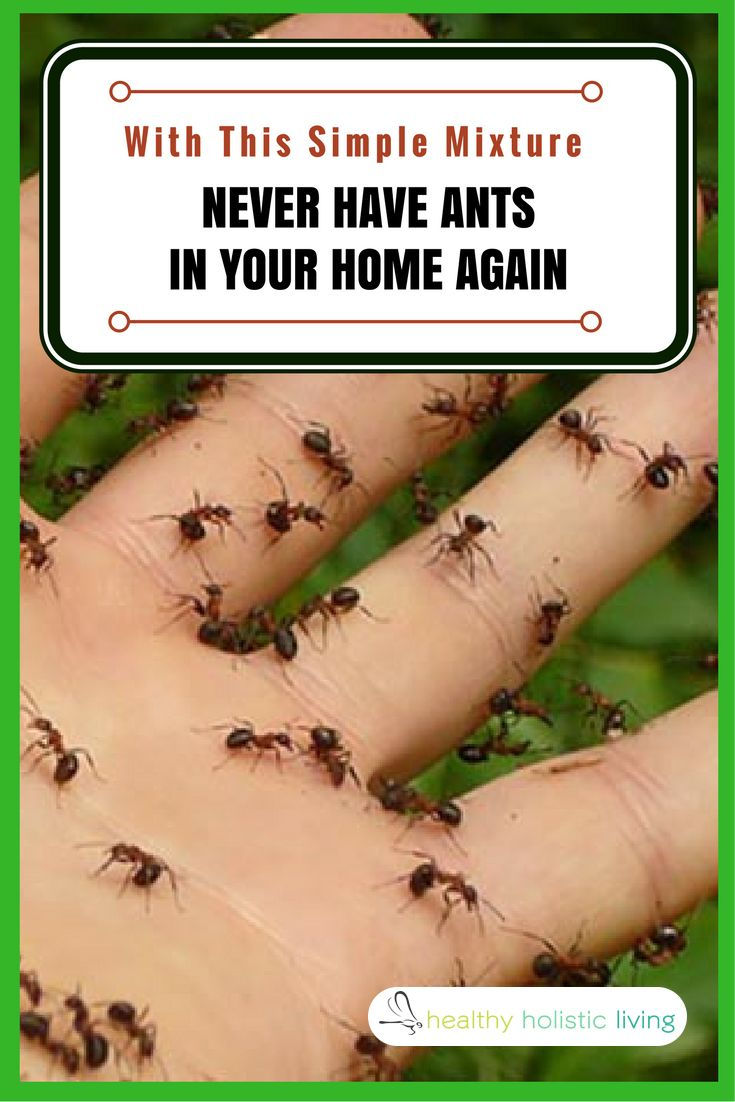 Spray This Simple Mixture And You Will Never See Ants In Your Home Again Ant Repellent Ants Essential Oils Ants