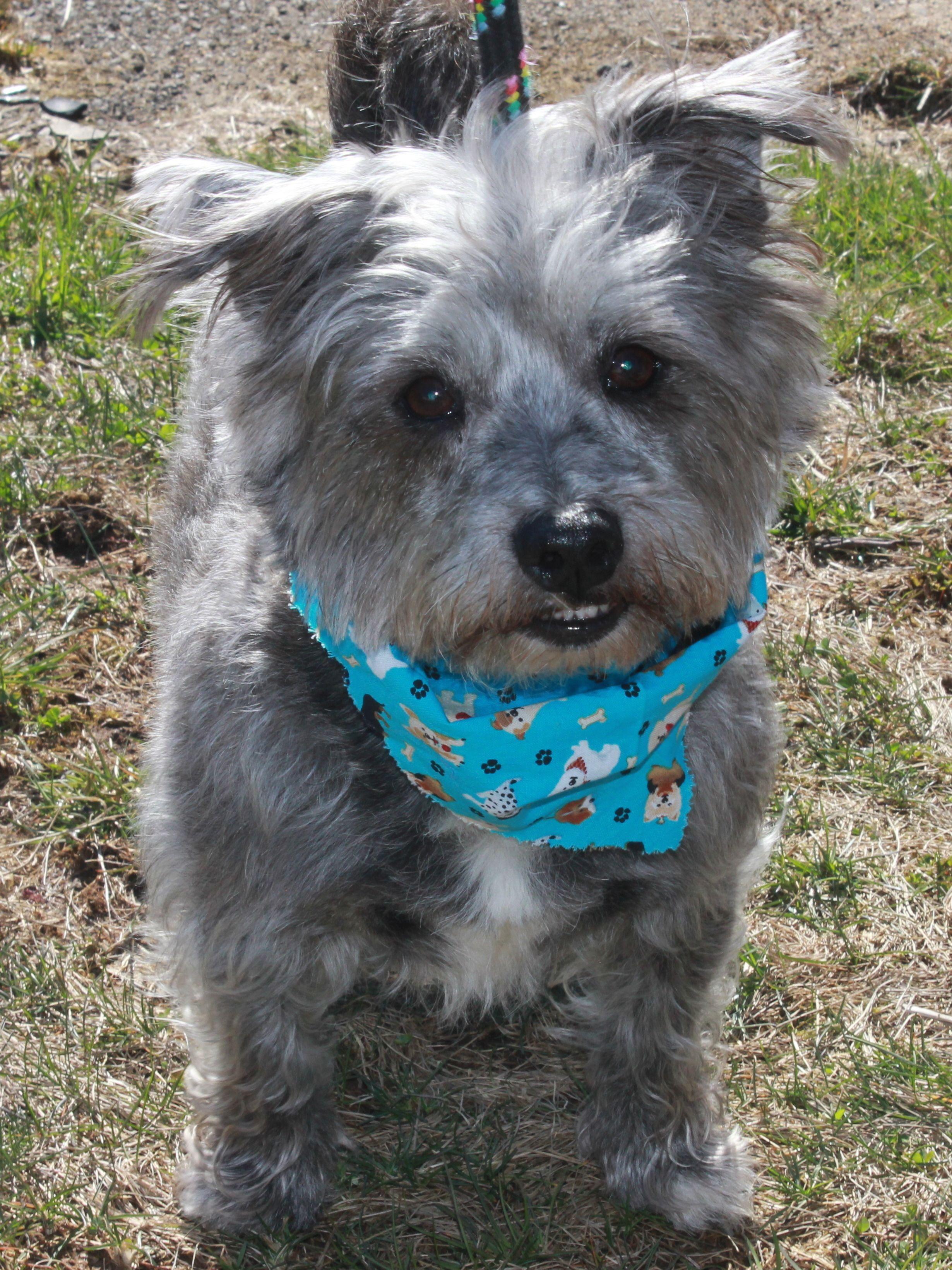 Adopt Puffy On Petfinder Help Homeless Pets Animal Shelter Dog Adoption