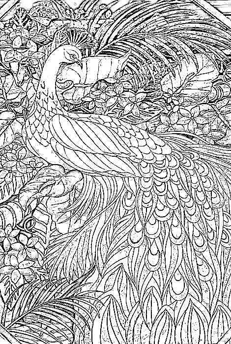 The printable peacock coloring