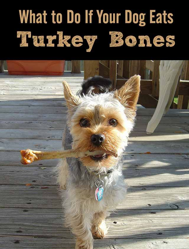 can dogs have turkey bones