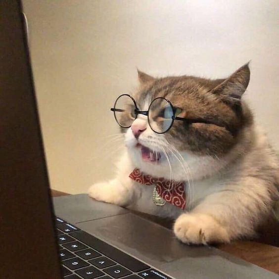 The proliferation of cat videos is obviously a very great thing, but wouldn't it be great if someone could do all the legwork and send you over a digest of the five most essential cat videos of the month?