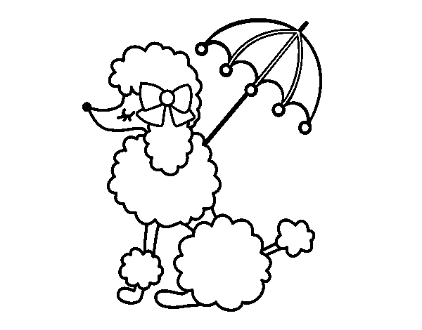 Poodle With Sunshade Coloring Page In 2020 Poodle Drawing Coloring Pages Poodle