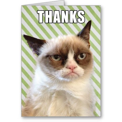Funny Thank You Cat Memes : Grumpy cat™ thank you card cards photos and