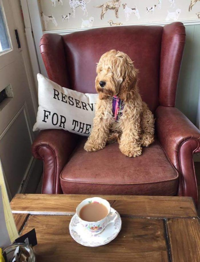 10 Of The Best Dog Friendly Cafes And Coffee Shops Dog Cafe Pet Cafe Dog Friends