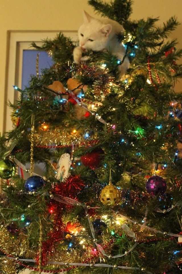 Christmas Tree Cat Christmas Cats Cat Christmas Tree Christmas Animals
