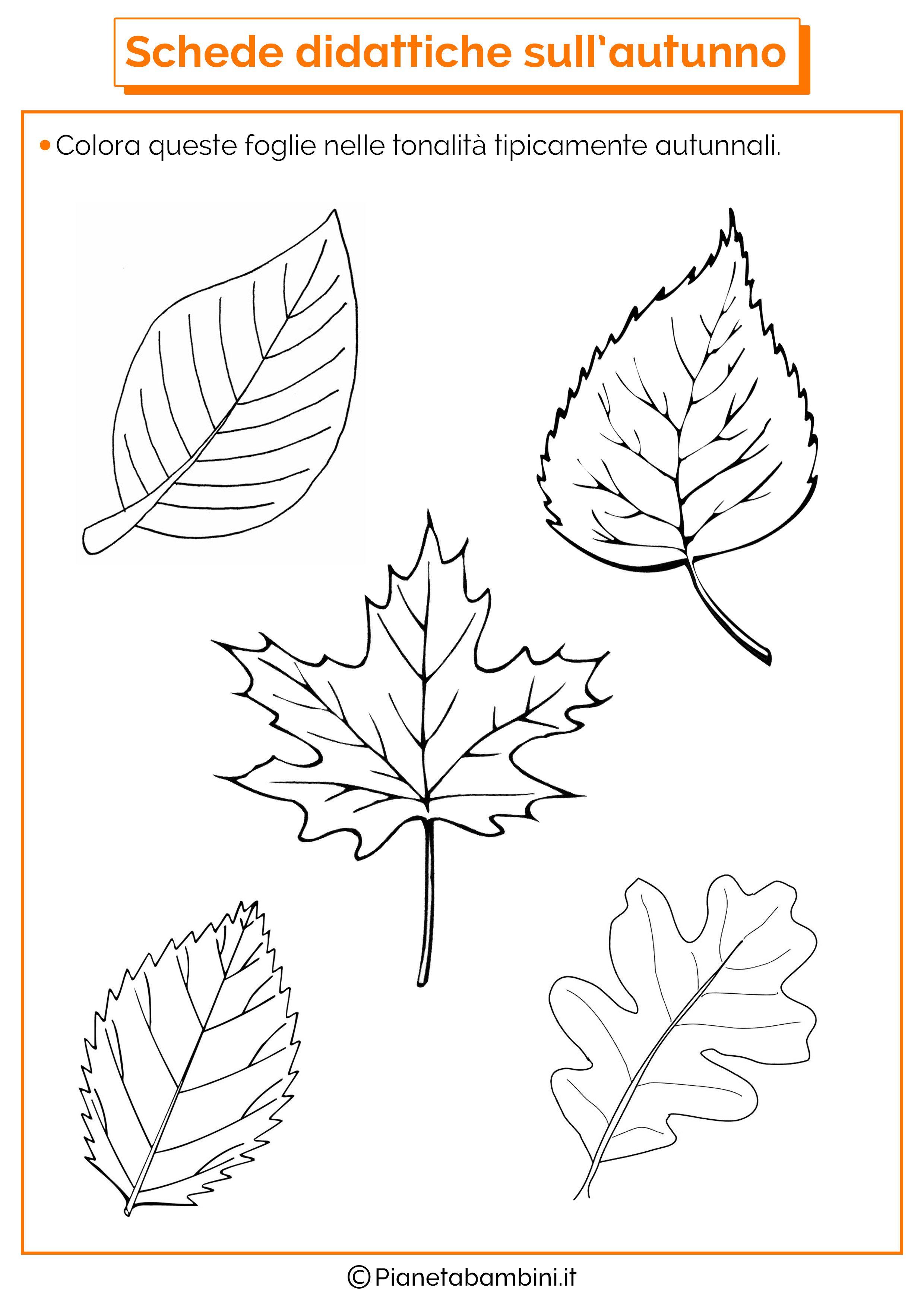 Risultati immagini per schede didattiche sull 39 autunno for Schede didattiche natale scuola dell infanzia