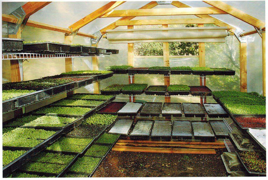 Image result for microgreens greenhouse