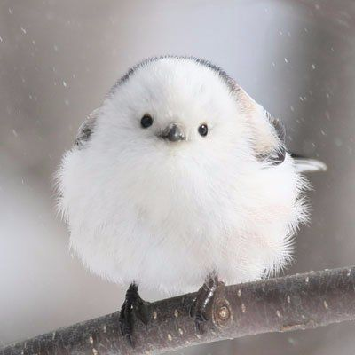 -   - #wildbirds #wildbirdsnames #wildbirdsunlimited #wildsbirds