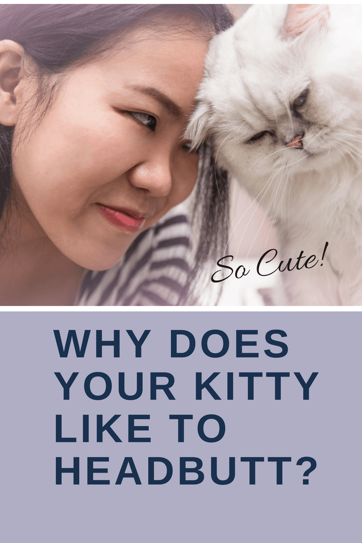 Cat behavior explained why does your kitty like to
