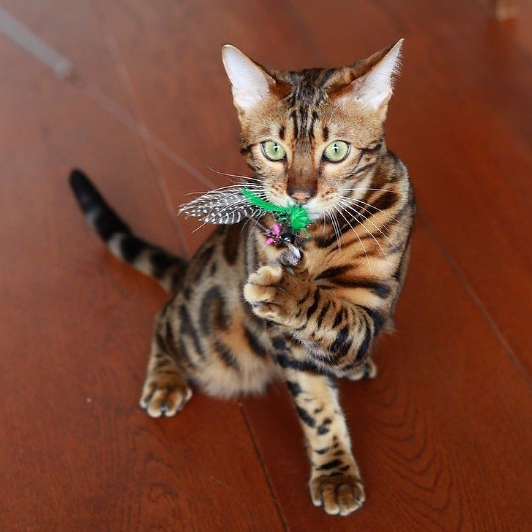 Emergency veterinary advice for what to do if your pet