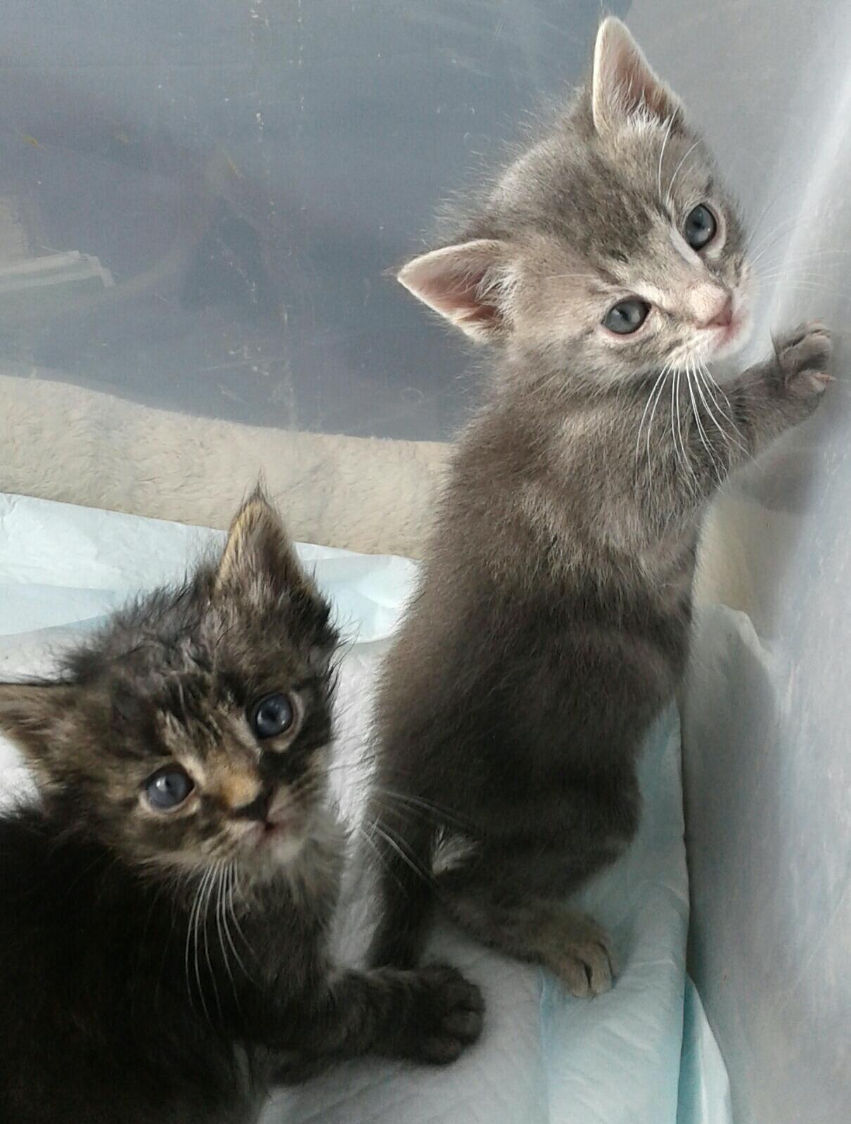 Jackie Dale Cat Mother Freelance Tnr Cat Trapper Rescuer Broker Kitten Season Tnr Cats Animal Rescue