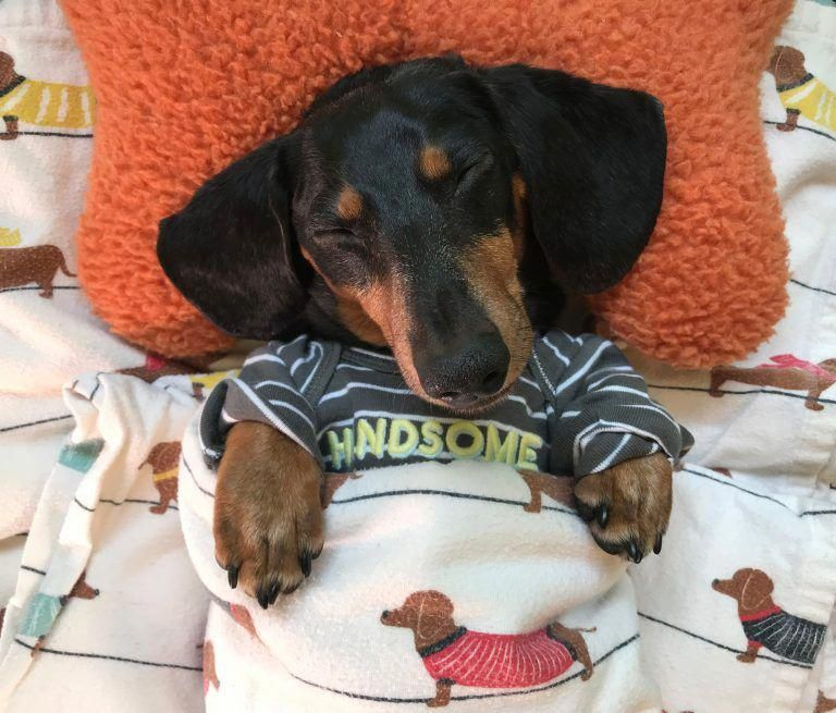 Check Out Our Website For More Relevant Information On Dachshunds