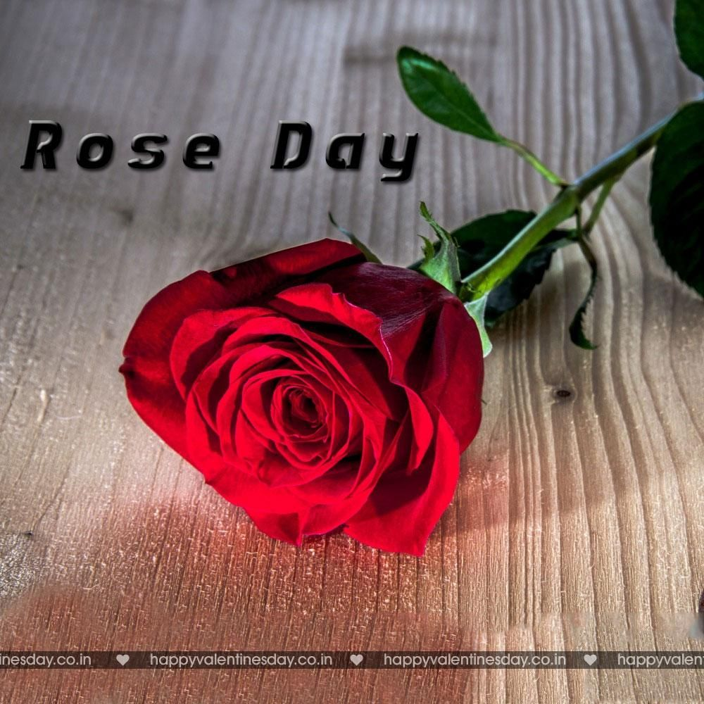 Rose Day Happy Valentines Day Funny Quotes Happy Valentines Day Greetings Happy Valentines Day Messages Happy Valentines Day Gifts Happy Valentines Da Happy Valentines Day Funny