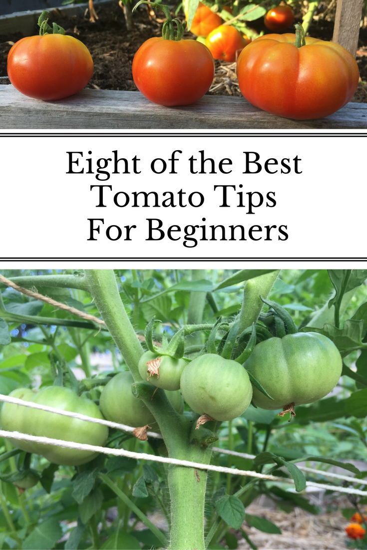 10 Gardening Tips For The Best Tomatoes Tips For Growing 400 x 300