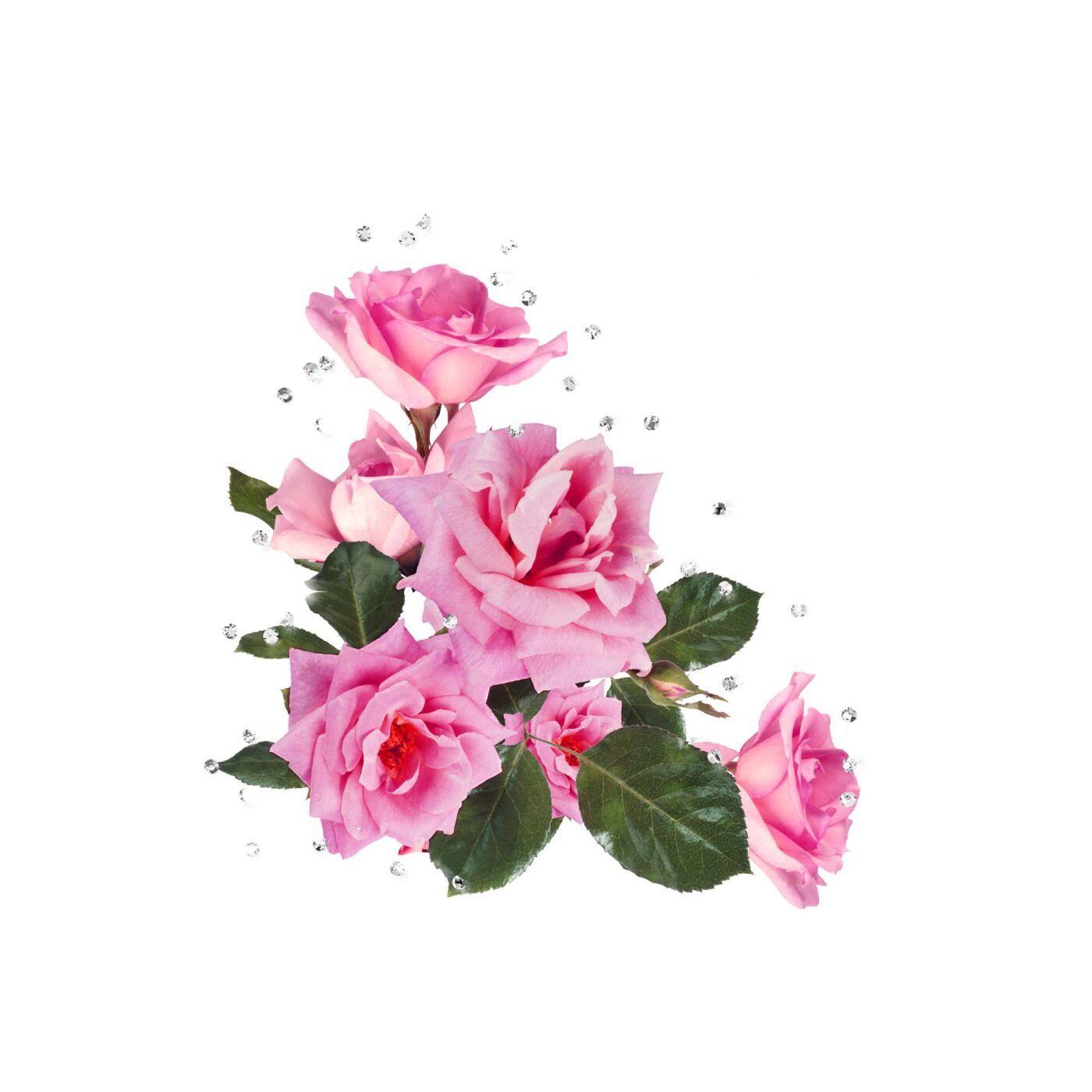 клипарты розы на прозрачном фоне: 19 тыс изображений ...