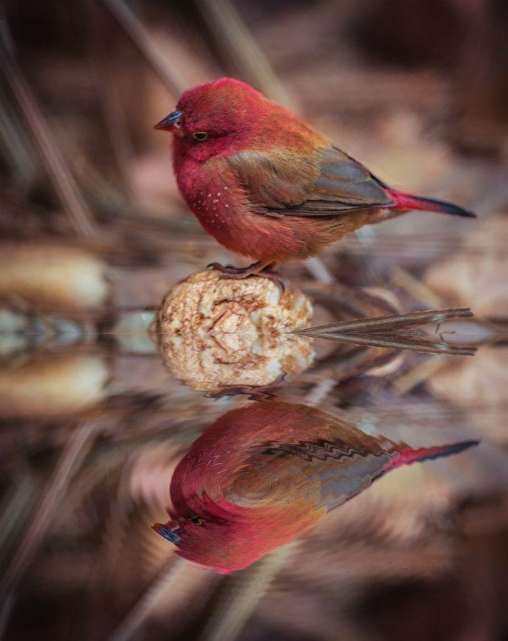 Galeria Animal - 22 Fotos - Wildlife