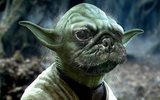 Pug Yoda Star Wars