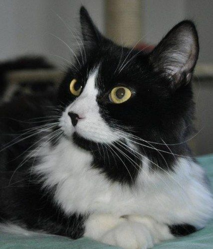 Adopt Annabella On Petfinder Crazy Cats Cat Adoption Cats And Kittens