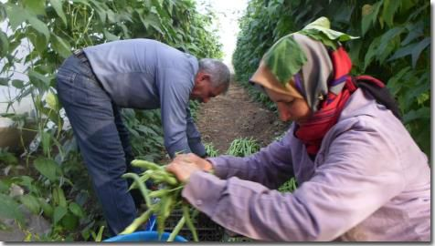 Permaculture and the sustainability of resistance. A west bank story.